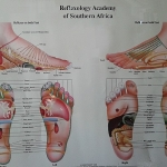 Linda Coyne's Reflexology chart